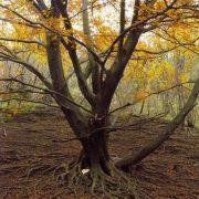 Essere albero